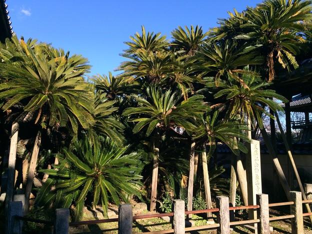 小山城麓 南陽植物