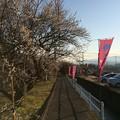 Photos: 曽我梅林8
