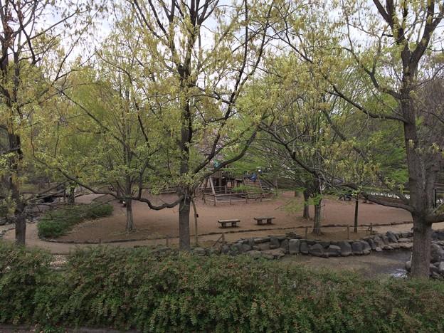 上岩崎公園5