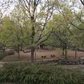 Photos: 上岩崎公園5