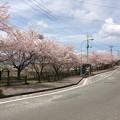 Photos: 佐野見晴台 桜並木1