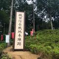 Photos: 織田信長戦地本陣跡