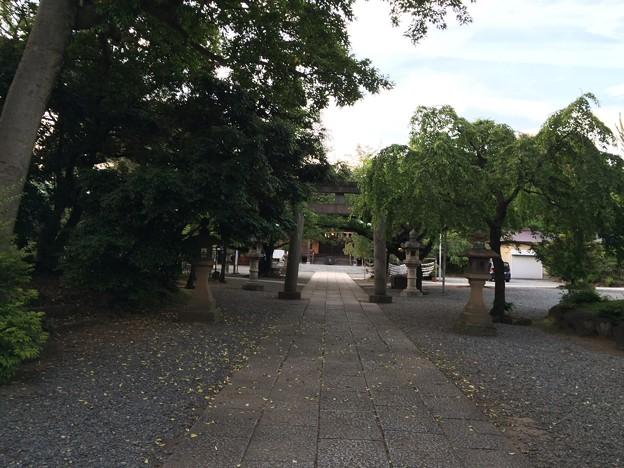 沼津 日枝神社 6月