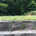 Photos: 三菱石炭鉱業大夕張鉄道線 遠幌駅跡3