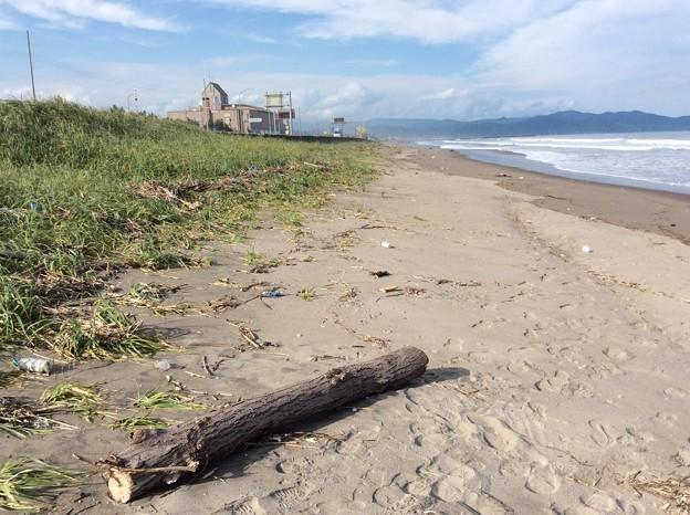 流木と砂浜 流木と砂浜
