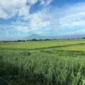Photos: 津軽平野5 ~岩木山2~