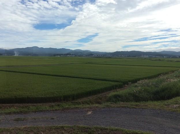 津軽平野10