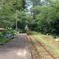 芦野公園駅から津軽中里方面を望む