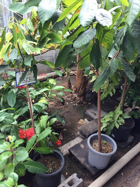 熱帯植物園2