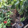 Photos: 熱帯植物園2