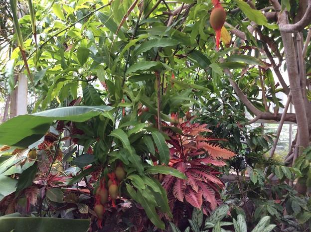 熱帯植物園3