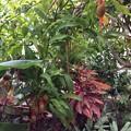 Photos: 熱帯植物園3