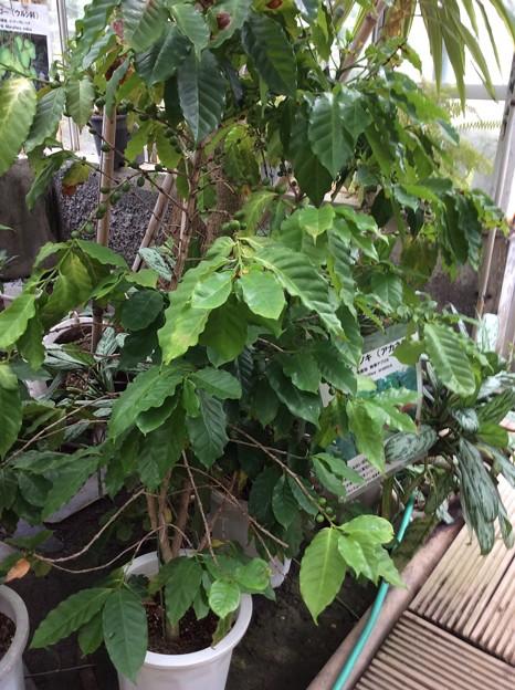熱帯植物園4