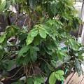 Photos: 熱帯植物園4