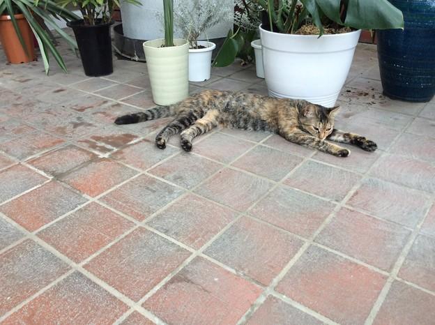 Photos: 植物園のネコ