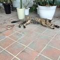 植物園のネコ