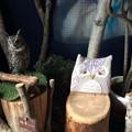 Photos: ぬくもりの森のフクロウ3