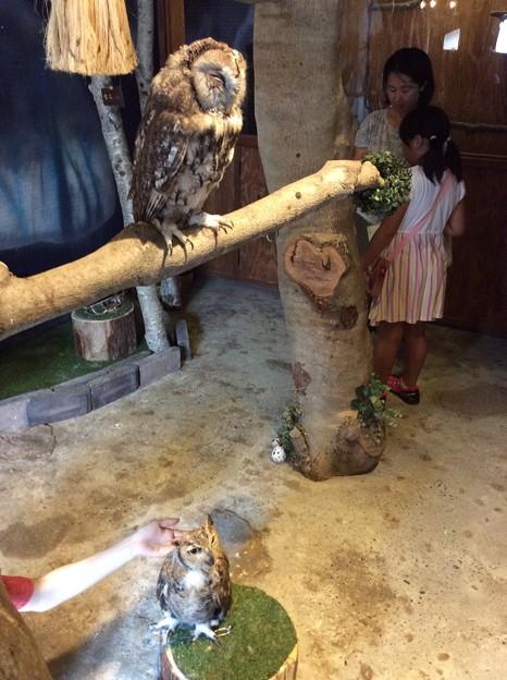 ぬくもりの森のフクロウ5