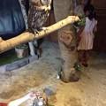 Photos: ぬくもりの森のフクロウ5