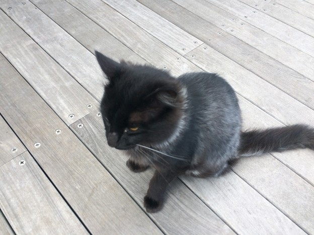 豊北の黒猫2