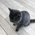 Photos: 豊北の黒猫2