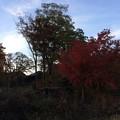 山中湖畔 紅葉1