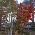 山中湖畔 紅葉2