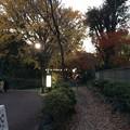 上野公園 小径
