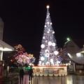 Photos: 高知市内のクリスマスツリー