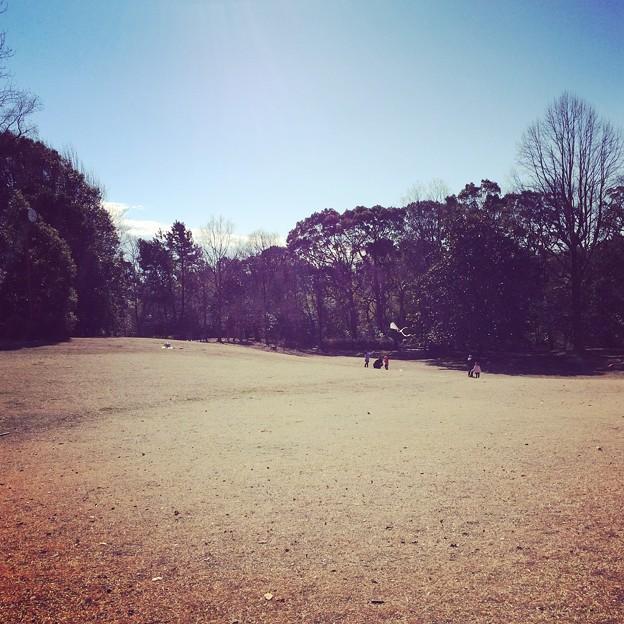 沼津市少年自然の家 芝生広場1