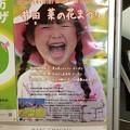 Photos: 井田 菜の花まつり ポスター