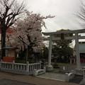 Photos: 吉原祇園祭 天神社1