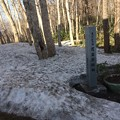 Photos: 藻岩山9 ~藻岩原始林と雪~