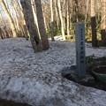 藻岩山9 ~藻岩原始林と雪~