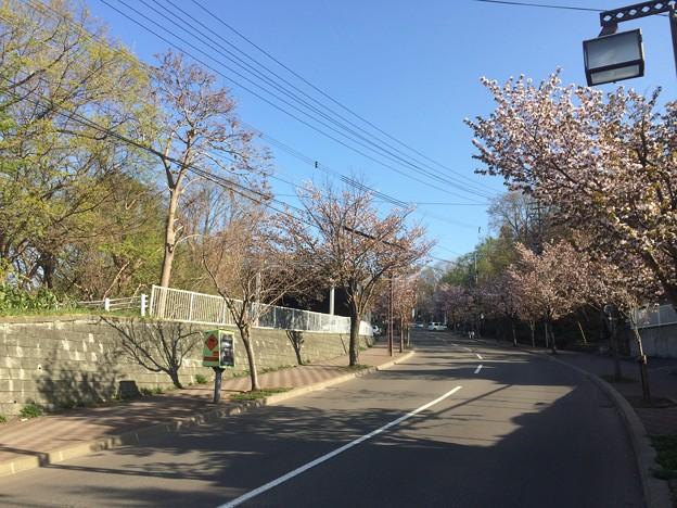 Photos: 藻岩山からの坂道