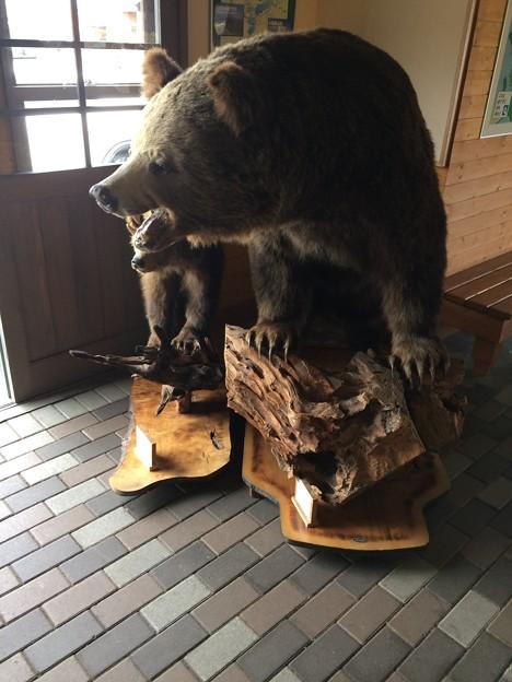 大沼国定公園 休み処のクマ