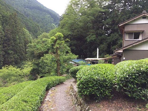 静岡市大沢 縁側カフェ6