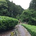 静岡市大沢 縁側カフェ7