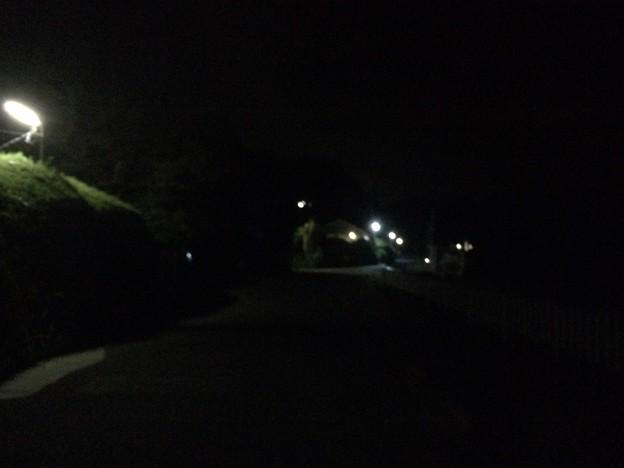 田牛の夜道2