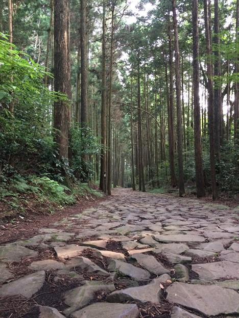 2017箱根西麓ハイキングコース1