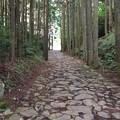 箱根西麓ハイキングコース2