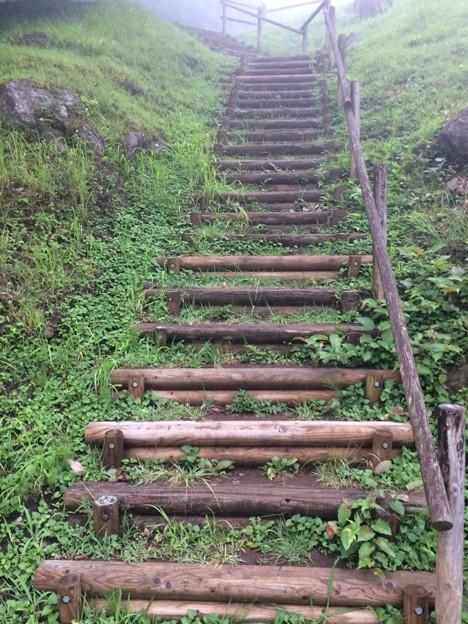 2017水と緑の杜公園2 ~階段~