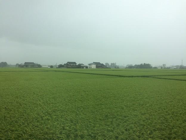 砺波平野と屋敷森2
