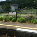 Photos: 上枝(ほずえ)駅