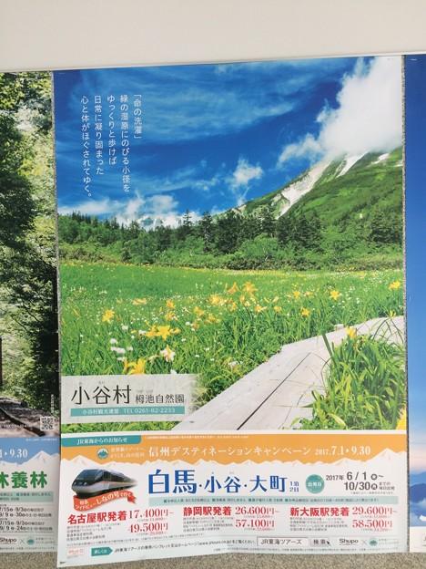 JR東海のポスター2 ~栂池~