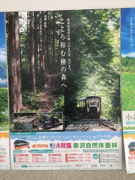 JR東海のポスター3 ~赤沢自然休養林~