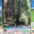 Photos: JR東海のポスター3 ~赤沢自然休養林~