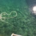 Photos: 内浦 漁港 海の底