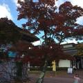 箱根園の紅葉1