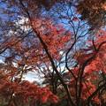 Photos: 長瀞 紅葉2